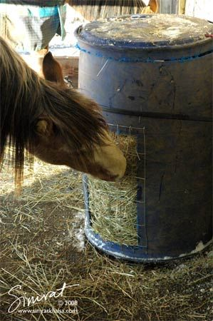 Horse feeder barrel with a piece of no climb mesh.....good idea!