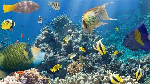 Thaimaan kaloja