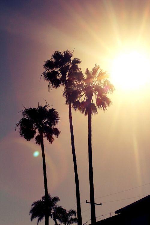 palm: Moon, Favorite Places, California Palms, Trees Sun, Sweet Summertime, Palms Trees, California Dreams, Beautiful Sky, Beaches Bum
