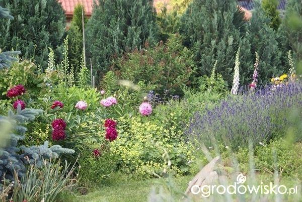 Ogrodnik Mimo Woli cd - strona 2168 - Forum ogrodnicze - Ogrodowisko