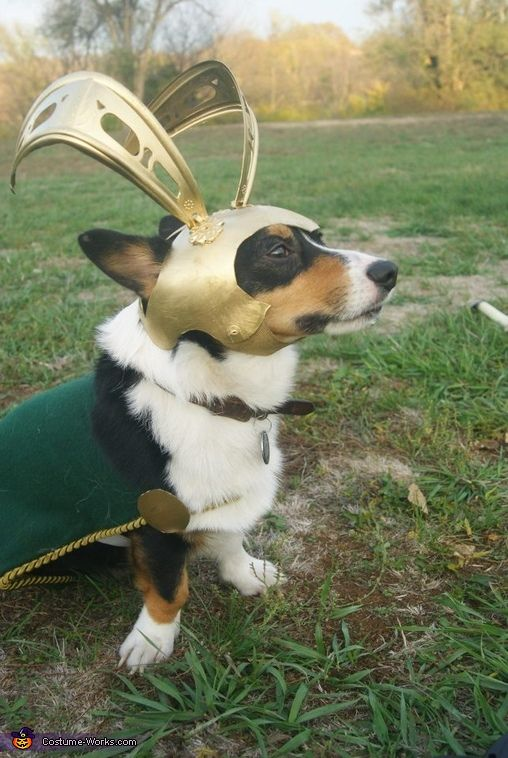 Loki Dog Costume | The Avengers Loki Dog Costume - Photo 2/2