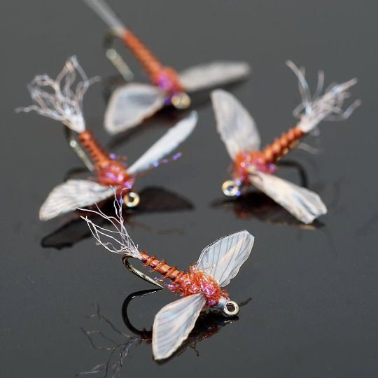 1330 best images about fly tying on pinterest for Rods fish food