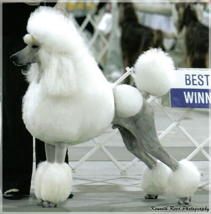 Best Dog Groomer In Beverly Hills