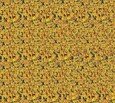 Magic eye software download free