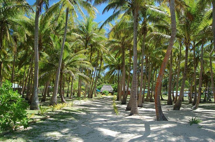 Острова Фиджи - Fiji Islands.. Обсуждение на LiveInternet - Российский Сервис Онлайн-Дневников