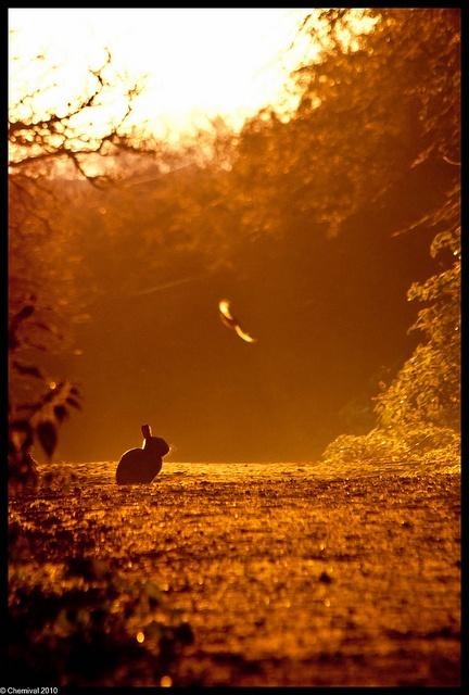 sunriseEnglish Meadow, Sunsets Sunrises, Sunrise Sunsets