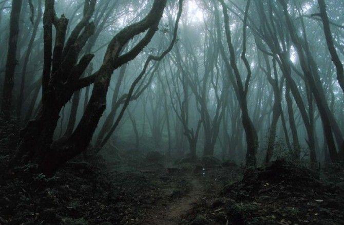 Lucy+Sky+nem+egy+normális+tinédzser.+Más,+mint+a+többiek.+Hallja+a+halottak+s+társaik+hívó+szavát.+Vajon+egy+felfedezés+romba+döntheti+a+lány+hétköznapi+életét?+Kiben+bízhat+meg?+Mi+történik+a+titokzatos+erdőben?+Sötét+titkok+kerülnek+a+felszínre.  Vér,+Szerelem,+Áldozat,+Harc... Ha+te+is…