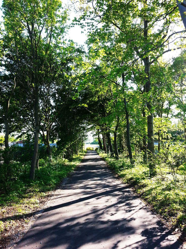 Odense City şu şehirde: Region Syddanmark