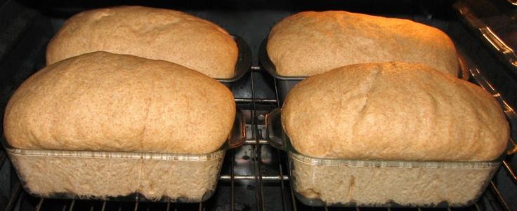Honey-Wheat Bread