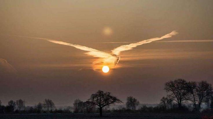 Il sole con le ali di un uccello