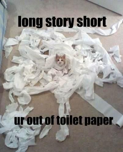 funny cat with toilet paper