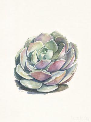 Echeveria 'Lola' - Watercolor