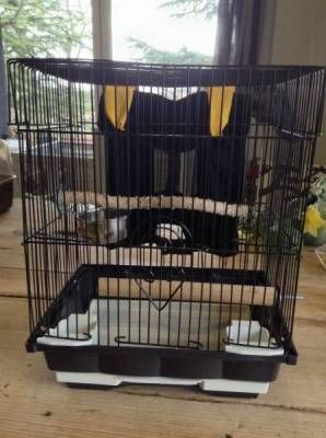 Petite cage de transport pour perruche, oiseau ou petit perroquet. Avec harnais pour enfant. CHF 40.-