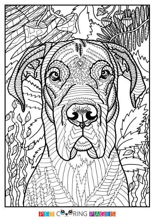 Free printable Great Dane coloring page available for download. Simple and detailed versions for adults and kids.