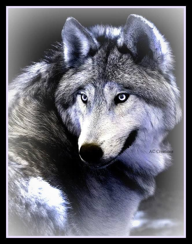 """Gray Wolf--Artist Unknown """"I would LOVE to Own this Portrait <3<3"""