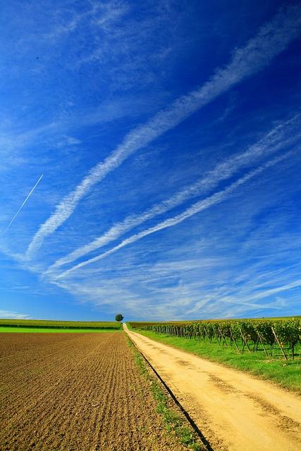Blauer Himmel, Weinreben - ein unvergesslicher Tag in Rheinland-Pfalz, Germany. Weitere Informationen über Rheinland-Pfalz auf unserem Blog www.Jewels24-news.de