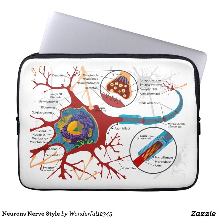23 best neurons healthy gift images on pinterest healthy nerve neurons nerve style ccuart Choice Image