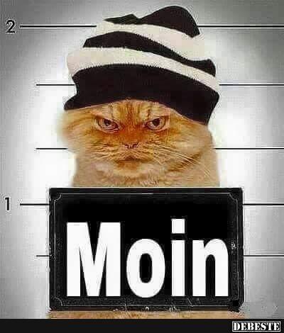 Moin Mehr