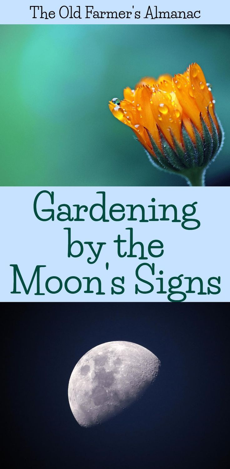Use the lore of Moon Signs to improve your garden and check out EXTRA! from The Old Farmer's Almanac.