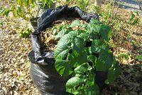 How to Plant Potatoes in a Bag | eHow