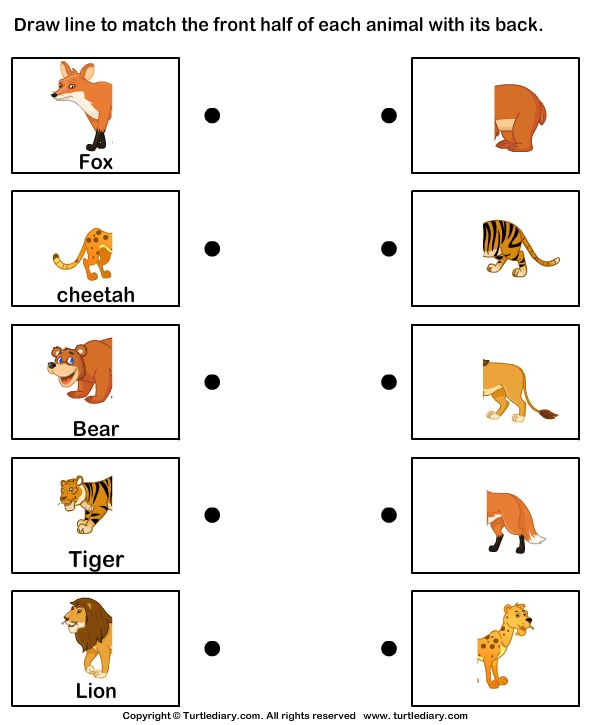 Animal Body Parts Worksheets Kindergarten - body parts worksheet for ...