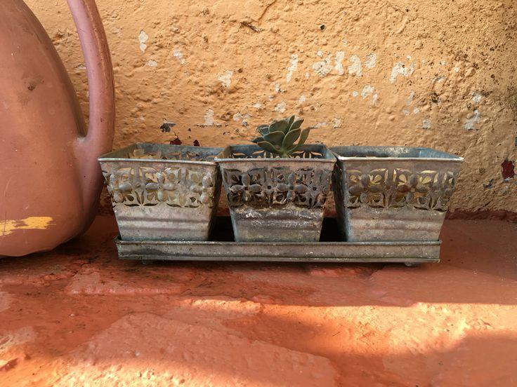 My little pot plant.