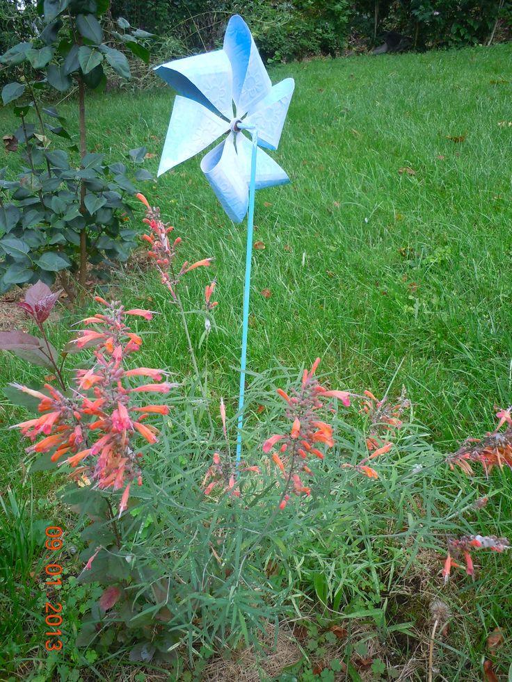 Tango Hummingbird Mint Home Our Home Cat Gardens