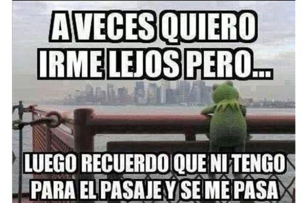 'A veces quisiera…' Los mejores memes de la Rana René - Veintitantos
