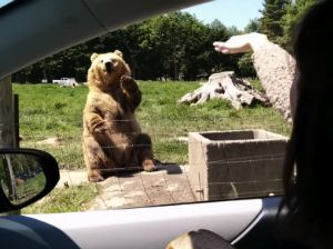 This Friendly Bear Waves to People and Then Handily Catches a Piece of Bread! | Happify