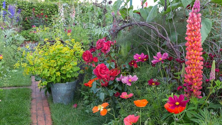 Designer Sarah Raven says the borders have a bride (the lupin) a bridesmaid (the cosmos) and a gatecrasher (the Iceland poppy) to make the combination so successul. This pretty poppy is Papaver 'Champagne Bubbles'.