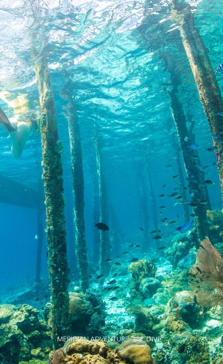 Blue Marine Dive Resort