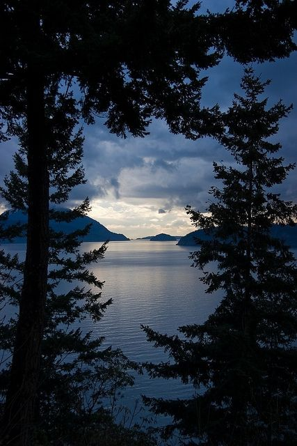 View of Howe Sound framed in trees from the Sea to Sky Highway in British Columbia, Canada.