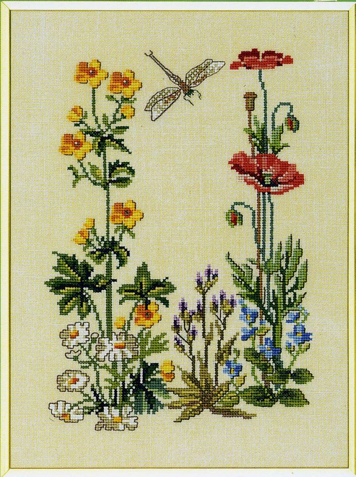 Eva Rosenstand wildflowers