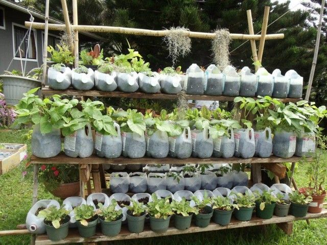 Teach kids how to reuse milk containers, juice boxes & milk cartons for plants. Great ideas for school or community garden projects.