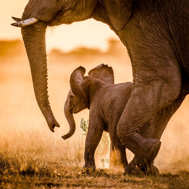 Elephant baby by Gunther Wegner