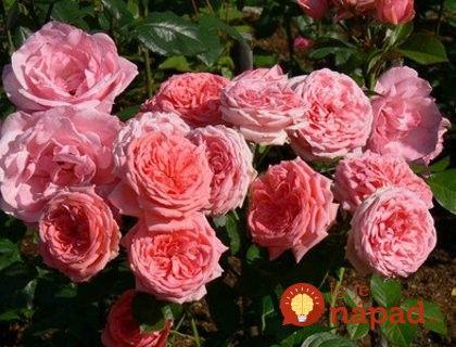 Если вы получите розу, не ждать, пока ты не вянут: Это просто переименовать его, чтобы украсить свой сад!