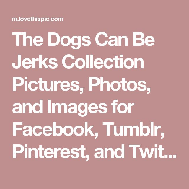 The Dogs Can Be Jerks Collection Pictures, Photos, and Images for Facebook, Tumblr, Pinterest, and Twitter