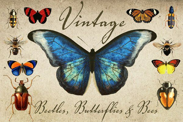 Vintage Beetles, Butterflies & Bees - Objects