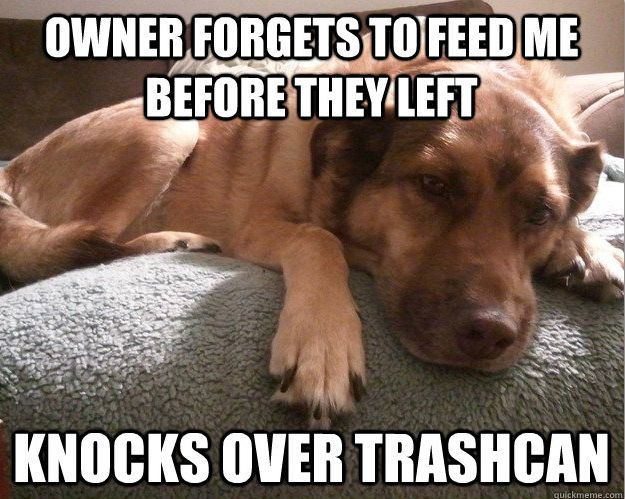 Hahaha awww reminds me of our late Meeka. She'd do this EVERY TIME, regardless of if we left food out or not. I miss that now.