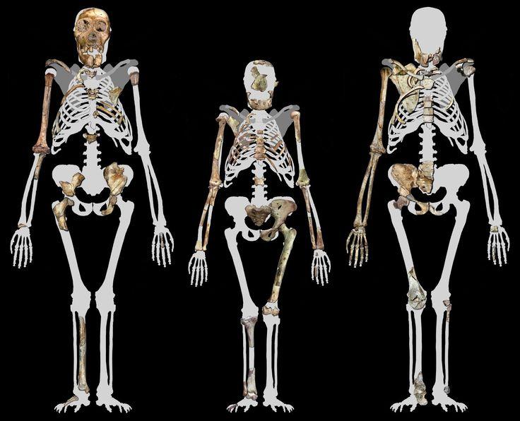 554 best paleoanthropology / paleogenetics images on pinterest, Skeleton