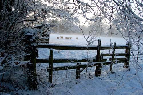 Snow on a field gate in Norfolk