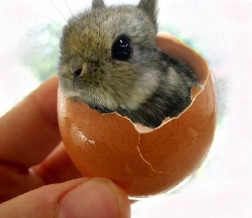 Baby rabbit hatching?