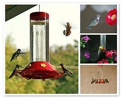 Homemade Hummingbird Nectar-I used to make this all the time, but could not remember sugar water ratio (sr moment?) haha so, this will come in handy when I do get old and forgetful...oh, I almost forgot that I had forgotten lol :)