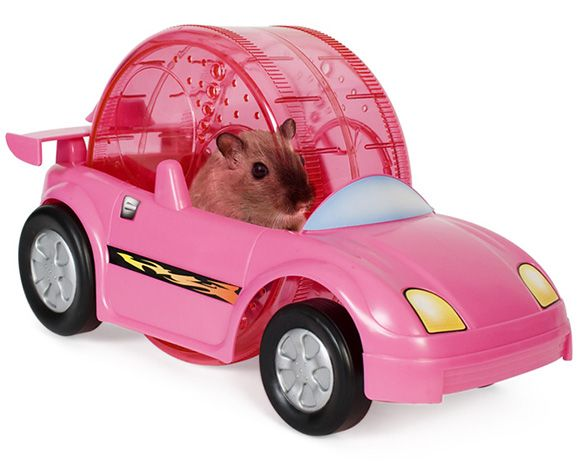 Critter cruiser is an exciting pet powered exercise car for hamsters and gerbils. Critter cruiser's adjustable racing wheel allows for the car to work in three different ways. First, when the comfort wheel is in ...