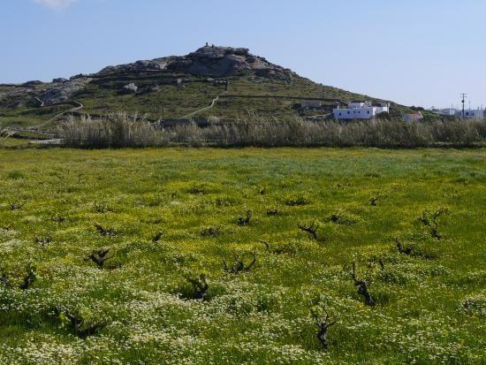 Photo of Mykonos Vioma Organic Farm & Vineyard