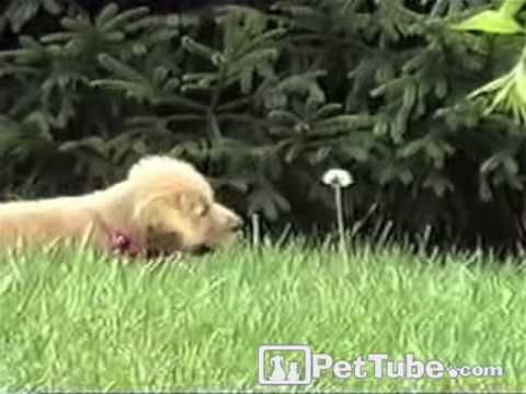 When a Puppy Attacks (A Weed) | The Animal Rescue Site Blog