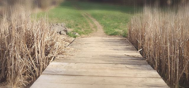 Trail Walks! Guelph has over 1000 hectares of parks and open space where you can find over 70 km of trails and paths.