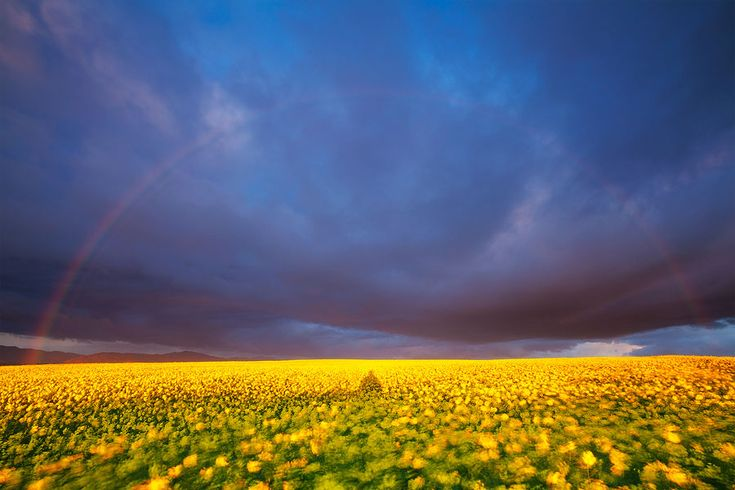 landscape photograph of a sunrise over canola farmlands Napier,OVERBERG,South Africa (Hougaard Malan)