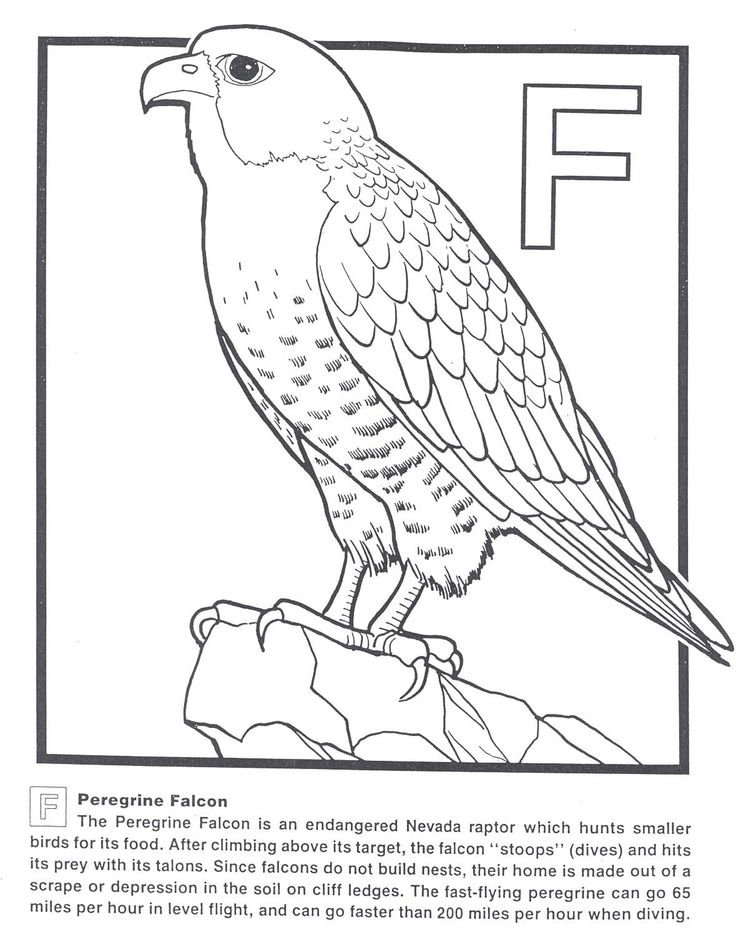 Peregrine Falcon Coloring Page How Draw Falcon Punch