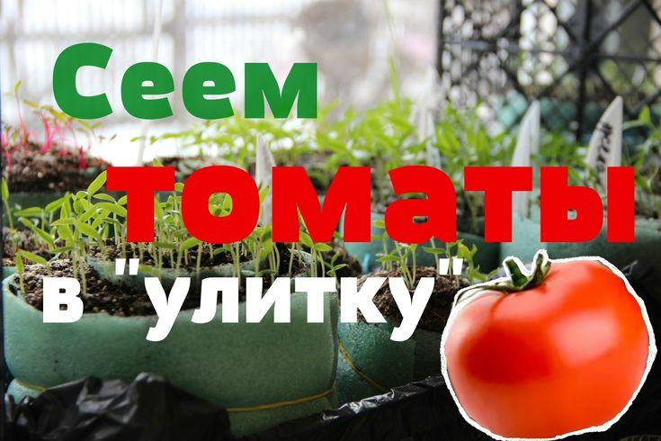 """Сеем томаты в """"улитку"""" (22.02.2016)."""